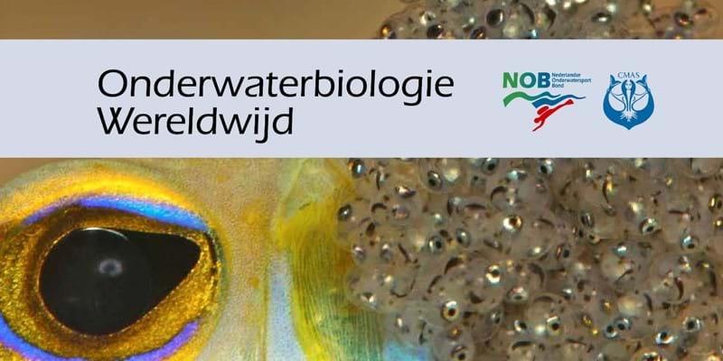 Sportwereld tegen corona: Onlinecursus 'Onderwaterbiologie' in één dag volgeboekt